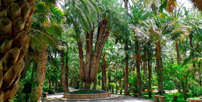 Palm Groves of Elche & El Hondo Nature Reserve - Costas Online