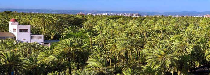 Palm Groves of Elche